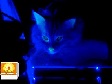 Glow In The Dark Cat Helps Scientists