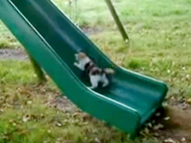 Silly Kittens Use Slide As Treadmill!