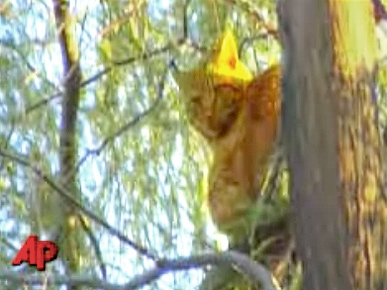 Cat Rescued After Spending 8 Days in Tree