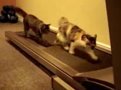 Video: Cats Running on a Treadmill
