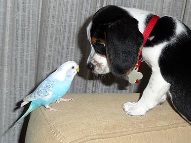 Caption Contest: So The Parakeet Says to the Beagle