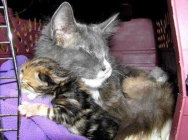 Happy Ending Afterall: Blind Cat Nurses Orphaned Kittens