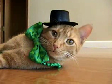 Tuesday&#39;s Funny Video: Happy St. Tabby&#39;s Day!