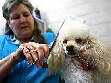 Clipping for a Cause! Groomer Donates Fur