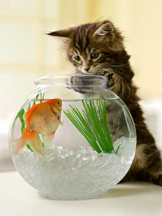 A Pet Food Dilemma: Should You Feed Your Pet Fish?