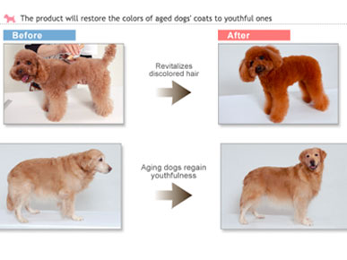 Coloring Dogs Fur Images - Irishdraught.us - irishdraught.us