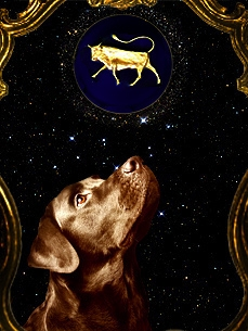Dog Horoscope: Taurus (April 20-May 19)