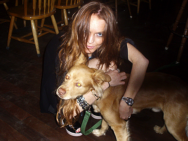 Lindsay Lohan fell in love during a recent trip to Maui. The lucky guy was a pit bull-Chihuahua mix named