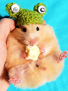 A Farewell to Internet-Star Buleczka the Hamster