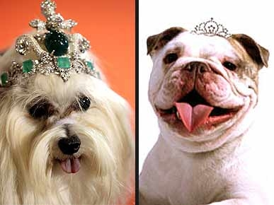 Look for Less: $4.2 Million Dog Tiara