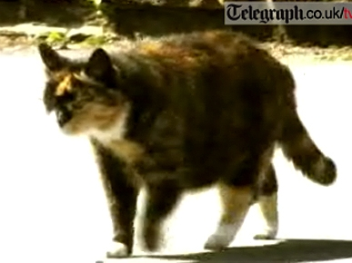 Midge the Cat: Born to Run