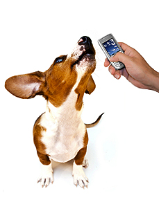 Your Dog Is Calling!  Make Your Pet's Voice Your Ringtone