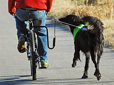 The Springer Bike Leash for Dogs: Safe or Silly?