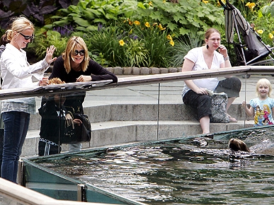 Spotted: Heidi Klum and Family Waving to the Seals!
