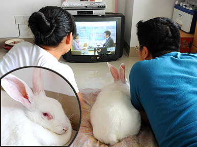 TV-Watching Bunny Loves Her Soap Operas!