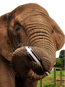 Really Heavy Metal! Harmonica-Playing Elephants Strike Up a Tune
