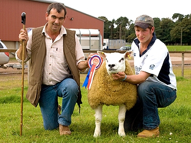 Shear Madness: World's Most Expensive Sheep Sells for Nearly $400,000