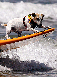 Surf's Up! 5 Tips for Teaching Your Pooch to Hang 20