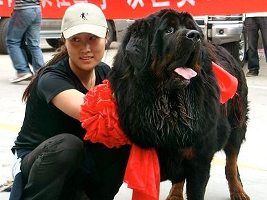 Dog Owner Get   Million Dollars