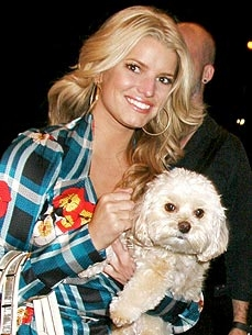 Experts Tell Jessica Simpson: Daisy&#39;s Loss &#39;Will Not Destroy You&#39;