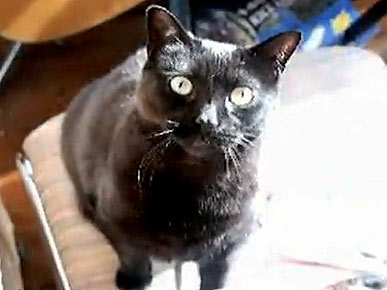 Tuesday's Funny Video: Another Begging Kitty!