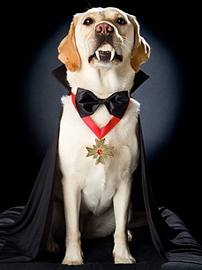 Hallow-WOW! 5 Tips for Photographing Your Pet in Costume