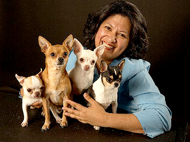 Meet a Member: Ada Nieves's Talented Chihuahuas Lead a Hollywood Life