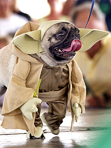What Not to Wear: Yoda Is Most-Searched Dog Costume!