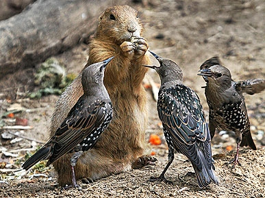 Fun Photo: Chipmunk Says, &#39;Back Off Birdies!&#39;