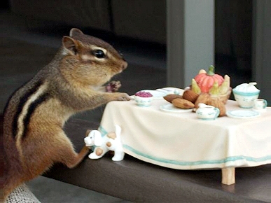 Animal 'D'Oh!': Chippy the Chipmunk Eats at the Table!