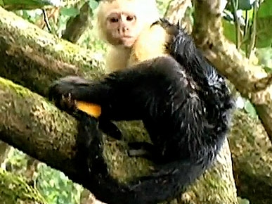 Thursday's Funny Video: Monkey Uses Orange As Loofah!