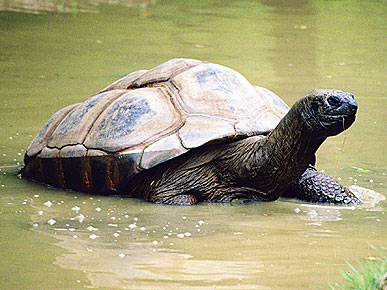 Surprise! Turns Out Mary the Tortoise Is Actually a Male