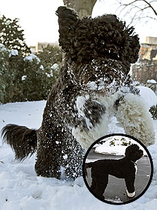 PHOTO: Bo Obama Plays in First Snow!