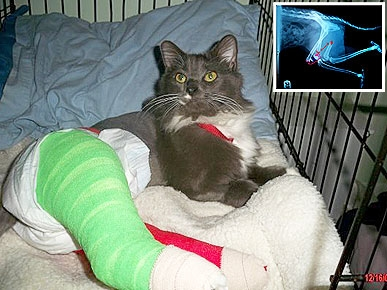 Missing Cat Hobbles Home on Two Broken Legs