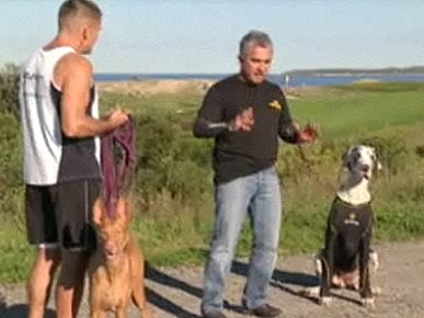 Cesar Millan Says G'Day to Problem Dogs Down Under