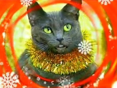 Friday&#39;s Funny Video: Jingle Cats Sing Auld Lang Syne!