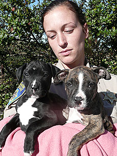 California 'Dumpster Dogs' Find a Home Sweet Home