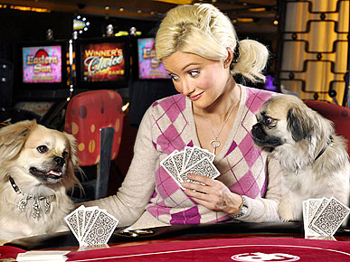 Oops! Holly Madison's Pup Bolts (Briefly) with $3.2 Million Collar