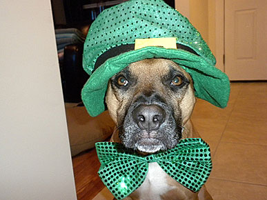 Photo Contest: Show Us Your St. Patrick's Day Pets!