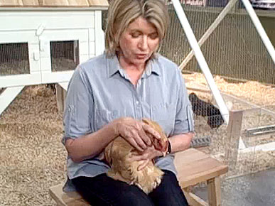 Martha Stewart Hypnotizes a Chicken!