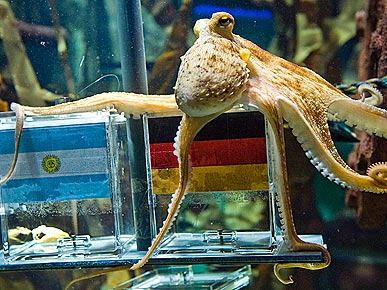 Paul the German Octopus Predicts World Cup Winners