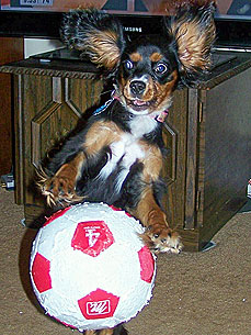 Caption Contest: Soccer Ball Takes Dog by Surprise!