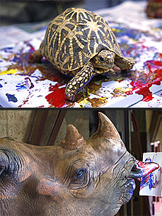 Animals Become Artists at the Oklahoma City Zoo