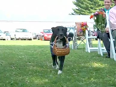 Wednesday's Funny Video: Wedding Dog Walks Down the Aisle
