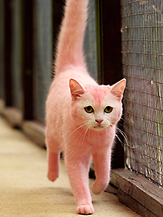 The Water Bowl: Pink Cat to Return to Pink-Haired Owner; Plus, Whale Riding Is a Bad Idea