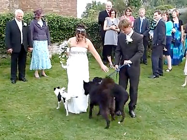 Wednesday's Funny Video: Dog Gives Bride a Wedding Surprise
