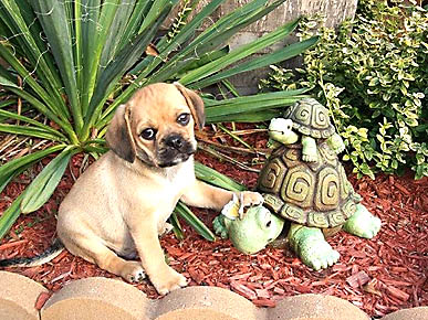 Caption Contest: When a Puppy Meets Some Turtles