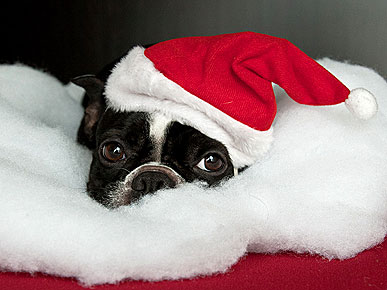 Santa Pets Wish You a Merry Christmas