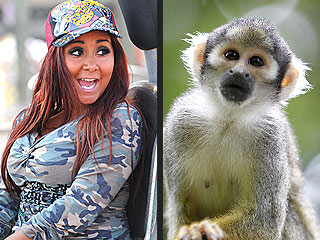 Squirrel Monkey, Snooki Similarities