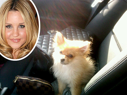 Amanda Bynes's Dog Dies